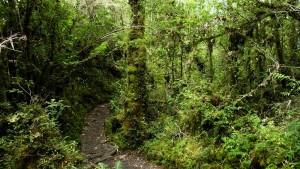 Dschungeltrail2