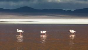 Flamingomarsch