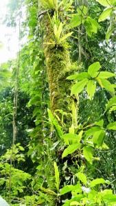 Dschungel2