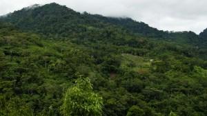 Dschungel3
