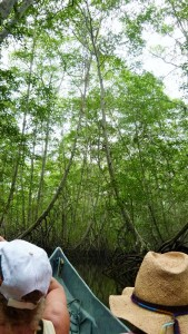 Mangrove neu