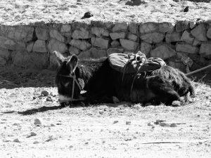 Titicaca5